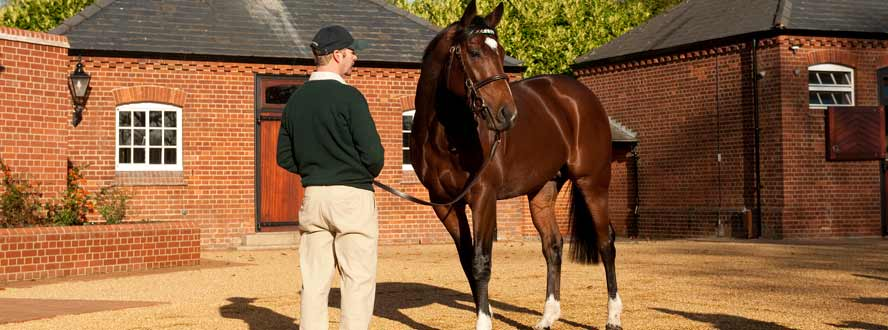 frankel at stud