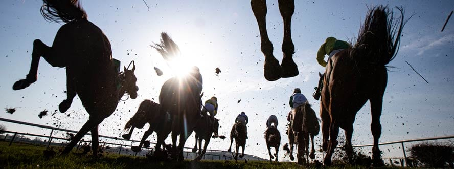 horse betting form guide